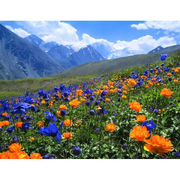 Мёд горный цветочный (Алтай...